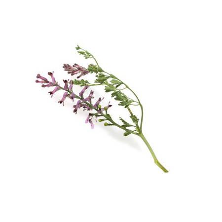 Þahtere (Fumaria Officinalis)
