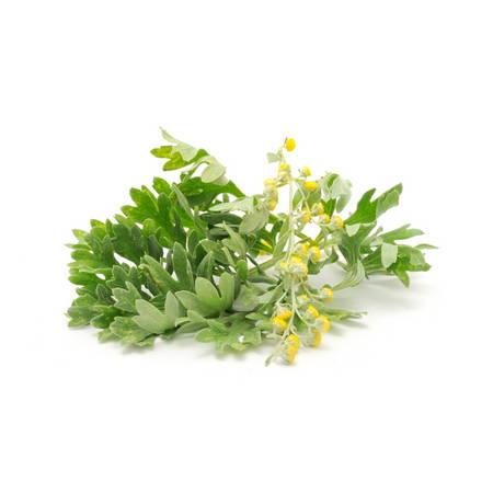 Pelinotu (Artemisia Absinthium)